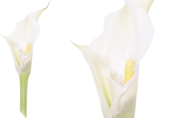 Vaginalna / cervikalna plodna sluz